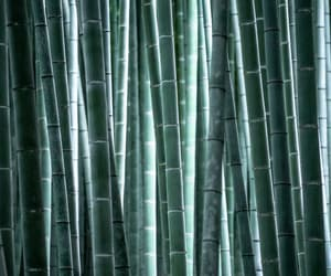 bamboo, forrest, and pattern image