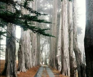 beauty, forrest, and nature image
