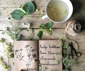 tea, flowers, and herbs image