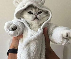 cats, cute, and love image