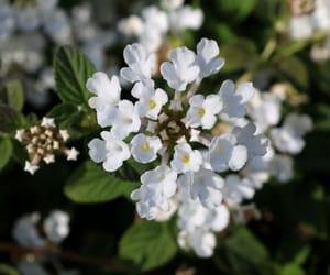 flowers, photographers on tumblr, and taormina image