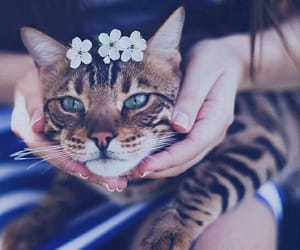 cats and flowers image