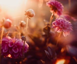 backlight, blossom, and closeup image