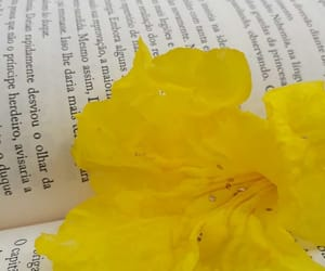 amarelo, flor, and throne of glass image