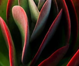 colorful, fabulous, and plants image