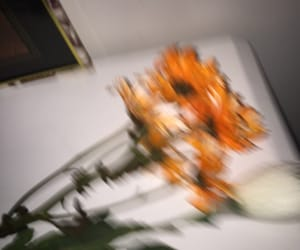 aesthetic, blur, and flowers image