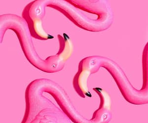 flamingos, pink, and plastic image