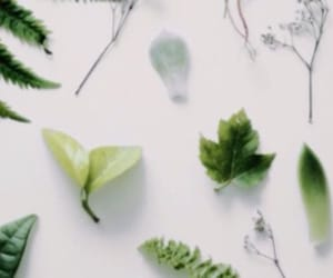 green, header, and twitter image