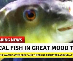 fish, reaction, and meme image