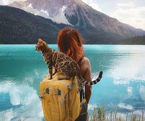 bag, cat, and pet image