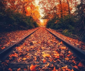 autumn, leaves, and photography image