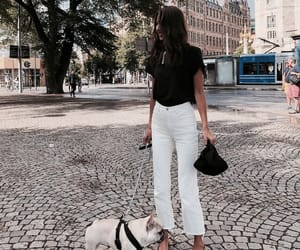 chic, dog, and stockholm image