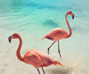 flamingo, summer, and beach image