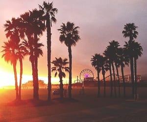 beautiful, palm tree, and photography image