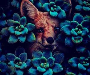 blue and fox image