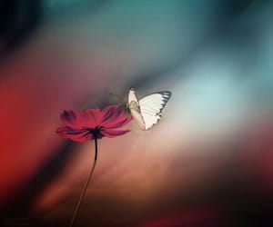 dreamy, red flower, and white butterfly image