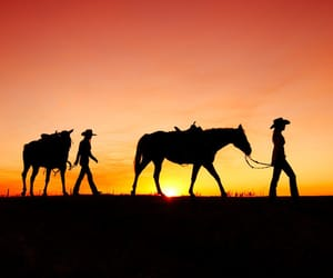 country, country life, and cowboy image