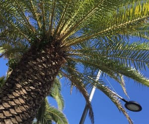 palm trees and summer image