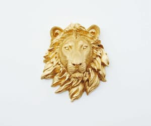 lion, gold, and gryffindor image