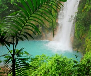 falls, green, and water image