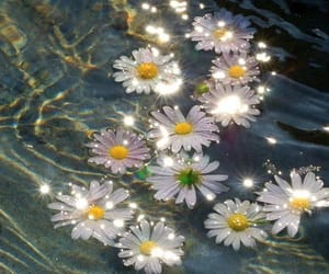 daisies, daisy, and dasies image
