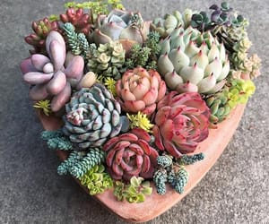 beautiful, flowers, and heart image