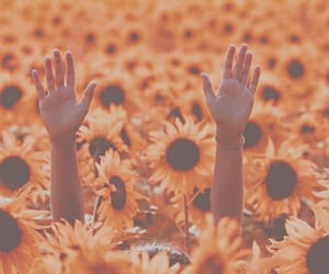 hands and sunflower image