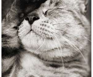 meow, cat, and sweet image