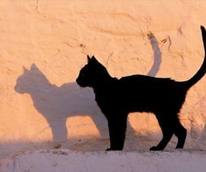 cat, shadow, and black image