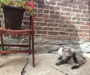 aesthetic, brick, and cat image