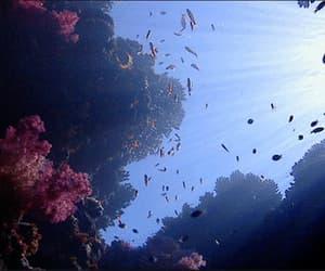 aquatic, blue, and fish image