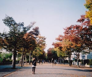 autumn, nature, and film image