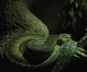 animal, black, and green image