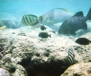 bay, fish, and snorkel image