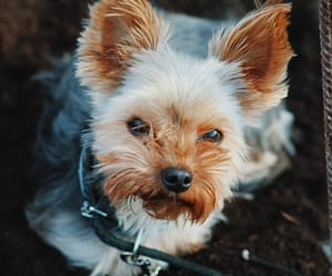 animals, dog, and tumblr image