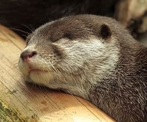 animals and otter image