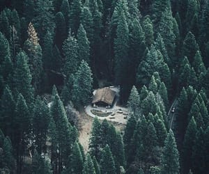 forest, green, and trees image