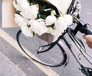 flowers, white, and bike image