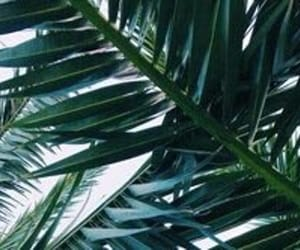 green, white, and header image