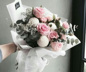 nature, rose, and roses image