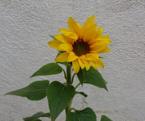 baby, sunflower, and green image
