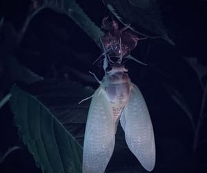 aesthetics, fantasy, and insect image