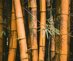 wallpaper, bamboo, and nature image