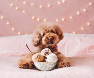 aesthetic, dogs, and photography image