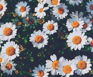 flowers, wallpaper, and nature image