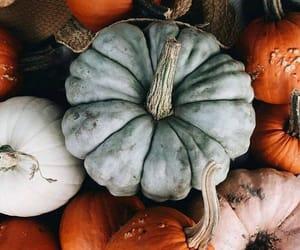 autumn, pumpkin, and fall image