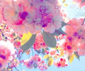 beauty, flor, and pink image