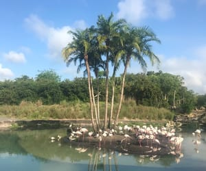 aesthetic, water, and flamingoes image