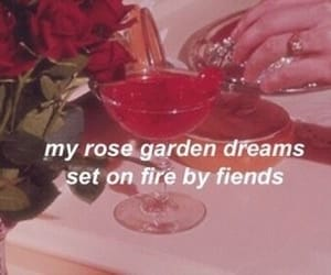 cherry, aesthetic, and rose image