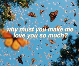 butterflies, orange and blue, and Lyrics image